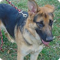 Adopt A Pet :: Timber - Greeneville, TN