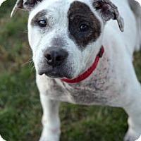 Adopt A Pet :: Serena - Niagara Falls, NY