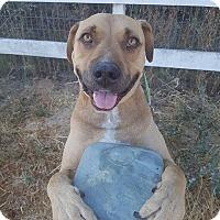 Adopt A Pet :: Louie - Lompoc, CA