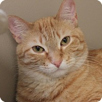 Adopt A Pet :: Tyler - Naperville, IL