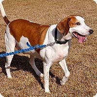 Adopt A Pet :: Ransom - Atlanta, GA