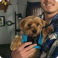 Adopt A Pet :: Neebo - Lorain, OH