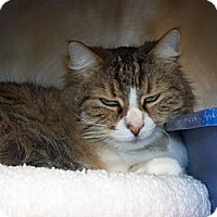 Adopt A Pet :: isabella - El Cajon, CA