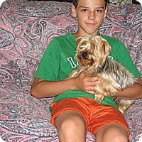 Adopt A Pet :: Rose - Salem, NH
