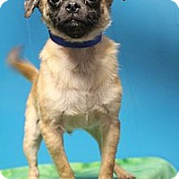 Adopt A Pet :: Oswald - Wytheville, VA