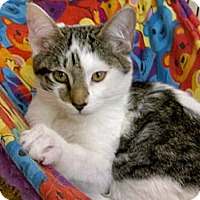 Adopt A Pet :: Johnnie - Bradenton, FL