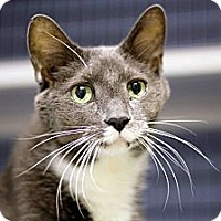 Adopt A Pet :: Jed - Chicago, IL