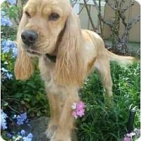 Adopt A Pet :: Thunder - Sugarland, TX