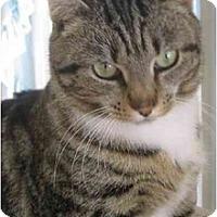 Adopt A Pet :: Minuet - Colmar, PA