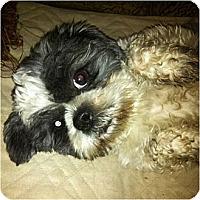 Adopt A Pet :: Zane-VA - Suffolk, VA