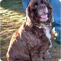 Adopt A Pet :: Charlyze - Tacoma, WA