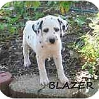 Adopt A Pet :: Blazer - League City, TX