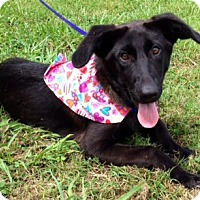 Adopt A Pet :: BEAUTY - Leland, MS