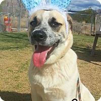 Adopt A Pet :: Bugs Bunny - Alamogordo, NM