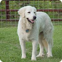 Adopt A Pet :: Kate  Adopted - Tulsa, OK