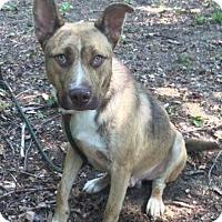 Adopt A Pet :: Charley - Brattleboro, VT