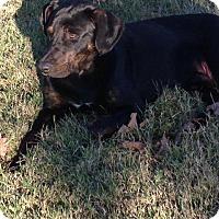 Adopt A Pet :: Leroy - Aurora, CO