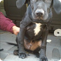 Adopt A Pet :: Zorro - Bowie, MD