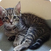 Adopt A Pet :: Monty- Fun loving/affectionate - Arlington, VA