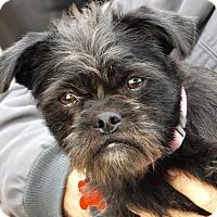 Adopt A Pet :: Sassy - Oakley, CA