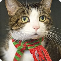 Adopt A Pet :: Goody - Chicago, IL