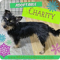 Adopt A Pet :: Charity - Troy, MI