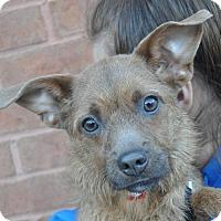 Adopt A Pet :: Sylvee - Atlanta, GA