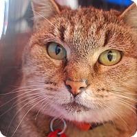 Adopt A Pet :: Raspberry - Alhambra, CA