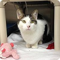 Adopt A Pet :: T-3 Linus - Triadelphia, WV