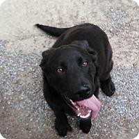 Adopt A Pet :: Joe Bob - Buffalo, NY