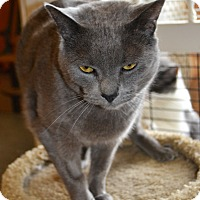 Adopt A Pet :: Hoss - Michigan City, IN