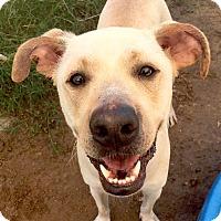 Adopt A Pet :: Casper - Austin, TX