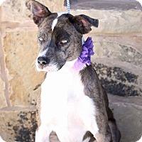 Adopt A Pet :: Kiwi - Lacey, WA