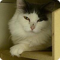 Adopt A Pet :: Hanna - Salem, NH