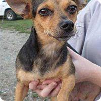 Adopt A Pet :: Lil Bit - Summerville, SC