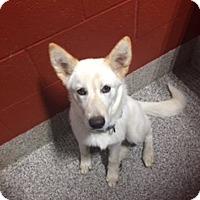 Adopt A Pet :: Bella - WAGONER, OK