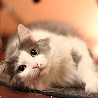 Adopt A Pet :: Tess - San Francisco, CA