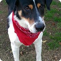 Adopt A Pet :: Gibson - Watauga, TX