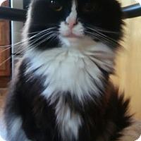 Adopt A Pet :: zz 'Mimi' courtesy listing - Cincinnati, OH
