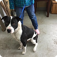 Adopt A Pet :: HoHo - Lewisburg, TN