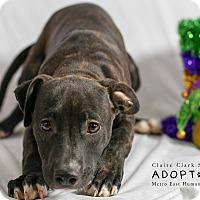 Adopt A Pet :: Inu - Edwardsville, IL