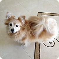Adopt A Pet :: man - Santa Ana, CA