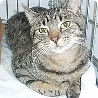Adopt A Pet :: Alvin - Germansville, PA