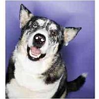 Adopt A Pet :: Jake ADOPTED - Scottsdale, AZ