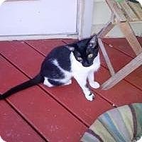 Adopt A Pet :: Marie - Tampa, FL