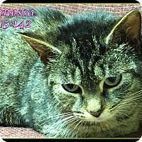 Adopt A Pet :: Vanessa - Tiffin, OH