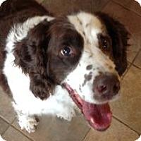 Adopt A Pet :: Clyde - Minneapolis, MN