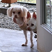 Adopt A Pet :: Camille - Seattle c/o Kingston 98346/ Washington State, WA