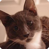 Adopt A Pet :: Colin - Brockton, MA