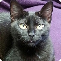 Adopt A Pet :: Midnight - Courtesy Listing - Sparta, NJ